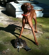 Remi Moskal's First Grouse